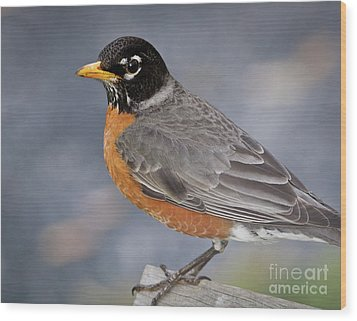 Wood Print featuring the photograph Robin by Douglas Stucky