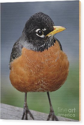 Wood Print featuring the photograph Robin II by Douglas Stucky