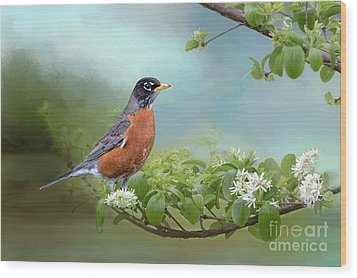 Robin In Chinese Fringe Tree Wood Print by Bonnie Barry