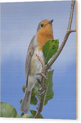 Robin In Eden Wood Print