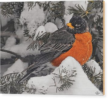 Robin In March Snowstorm In Michigan Wood Print