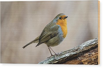 Robin In Spring Wood Print by Torbjorn Swenelius