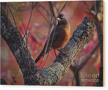 Wood Print featuring the photograph Robin In The Dogwood by Douglas Stucky