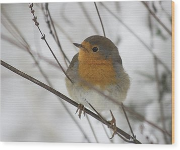 Robin In The Snow Wood Print