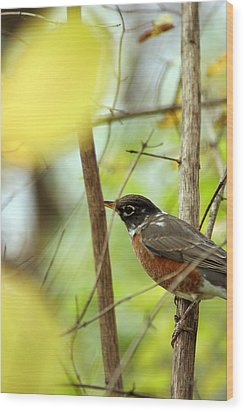 Robin Perched Wood Print by Off The Beaten Path Photography - Andrew Alexander