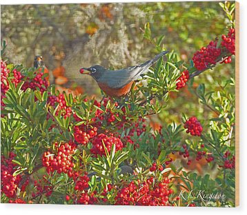 Wood Print featuring the photograph Robins Berry Feast by K L Kingston