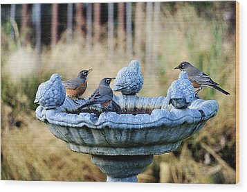 Robins On Birdbath Wood Print by Barbara Rich