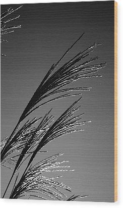 Robinwood Grasses Wood Print by Kristen Vota