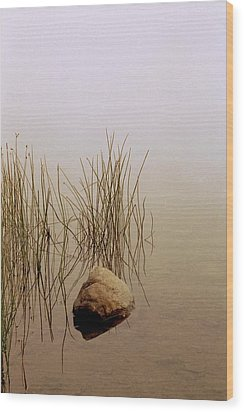 Rock And Reeds On Foggy Morning Wood Print