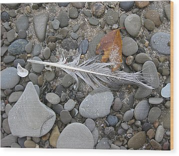 Rock Feather Shell Leaf Wood Print