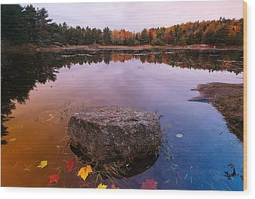Rock In A Pond Acadia Natioanl Park Maine Wood Print by George Oze