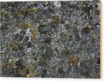 Rock Lichen Surface Wood Print by Nareeta Martin