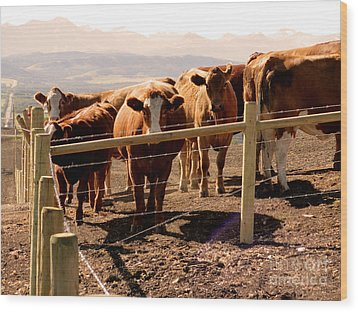 Rockies Cattle Country Wood Print
