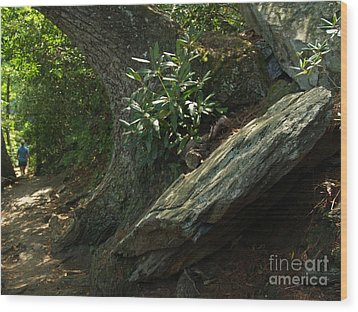 Rocks And Rhododendron At Chimney Rock Wood Print by Anna Lisa Yoder