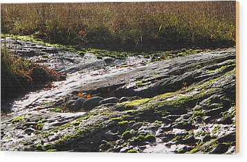 Rocks Moss And Grass 2  Wood Print by Lyle Crump