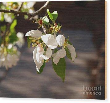 Rocky Mountain Apple Blossoms I Wood Print by Christine S Zipps