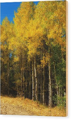 Rocky Mountain Aspen Color Wood Print by James BO  Insogna