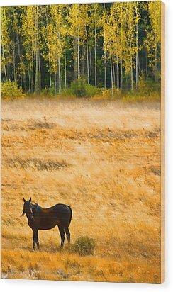 Rocky Mountain Autumn Graze Wood Print by James BO  Insogna