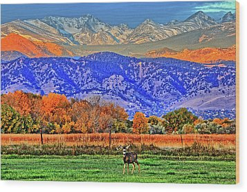 Wood Print featuring the photograph Rocky Mountain Deer by Scott Mahon