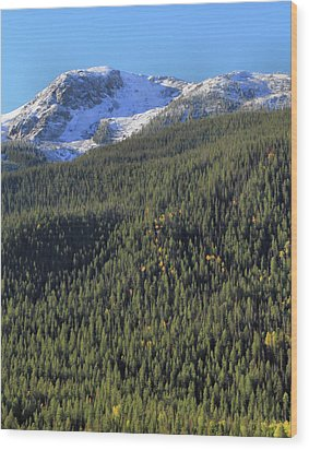 Wood Print featuring the photograph Rocky Mountain Evergreen Landscape by Dan Sproul