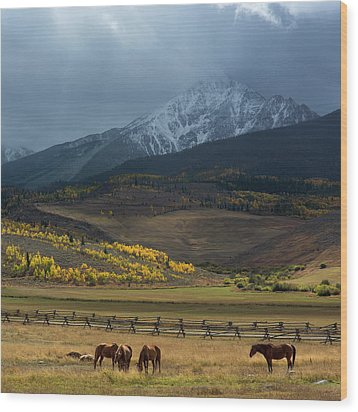 Rocky Mountain Horses Wood Print by Aaron Spong