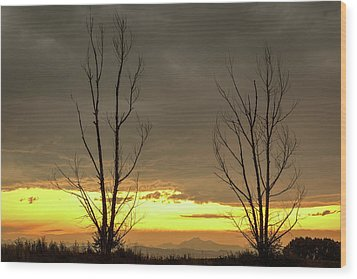Wood Print featuring the photograph Rocky Mountains Horizon Through The Trees by James BO Insogna