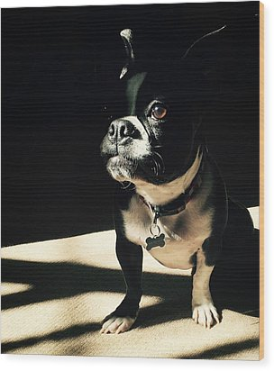 Wood Print featuring the photograph Rocky by Sharon Jones