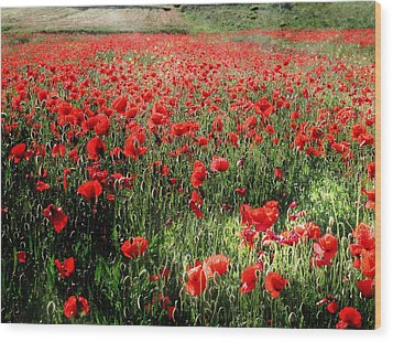 Rolling Fields With Poppies Wood Print by Dorothy Berry-Lound