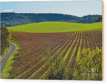 Rolling Hills And Vineyards Wood Print by CML Brown