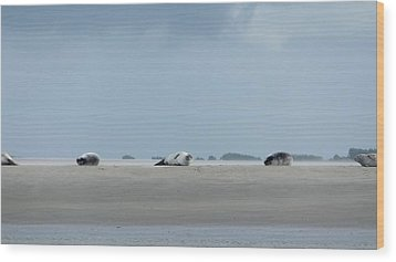 Wood Print featuring the photograph Rolling Seals by Marc Philippe Joly