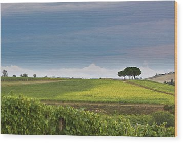 Rolling Tuscany 2 Wood Print by Patrick English
