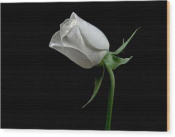 Romantic Rose Wood Print by Elsa Marie Santoro