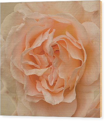 Romantic Rose Wood Print