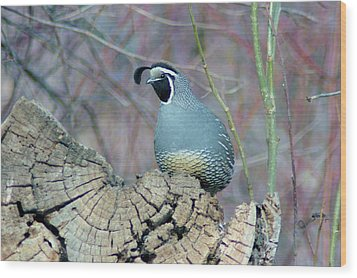 Rooster Quail  Wood Print by Jeff Swan