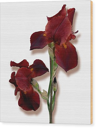 Root Beer Irises Wood Print by Tara Hutton