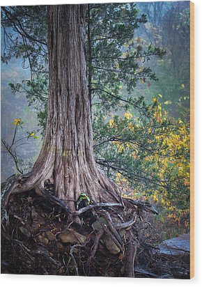 Rooted Wood Print by James Barber