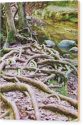 Roots And Rocks I Wood Print by Anna Villarreal Garbis