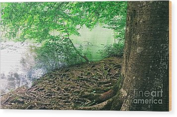 Roots On The River Wood Print