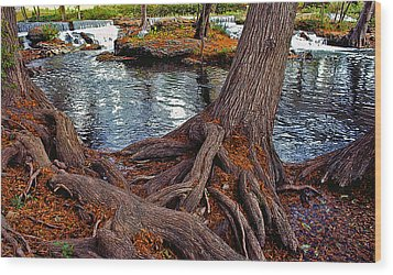 Roots On The River Wood Print by Stephen Anderson