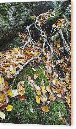 Roots Rock Reggae Wood Print by Thomas R Fletcher