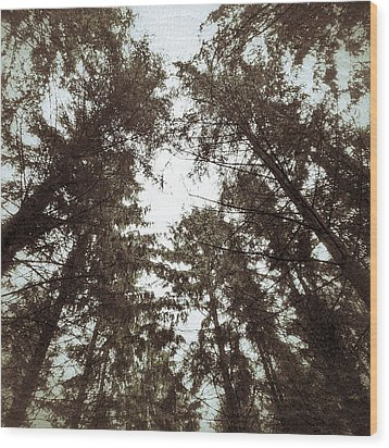 Rorschach Trees Wood Print by Karen Stahlros