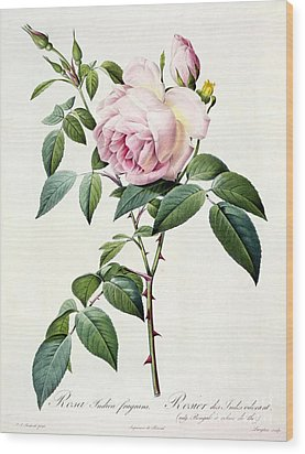Rosa Indica Fragrans Wood Print by Pierre Joseph Redoute