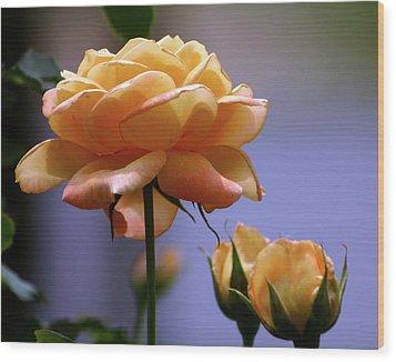 Rose 1156 H_2 Wood Print