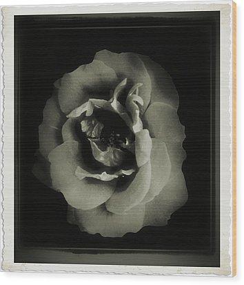 Rose 12 Wood Print