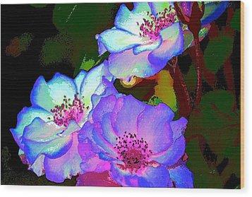 Rose 127 Wood Print by Pamela Cooper