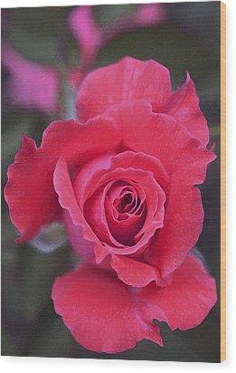 Rose 160 Wood Print by Pamela Cooper