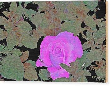Rose 97 Wood Print by Pamela Cooper
