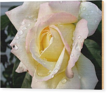 Rose And Raindrops Wood Print by Cynthia Lassiter