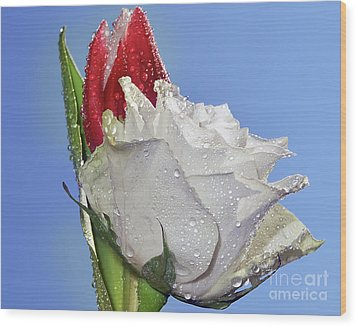 Wood Print featuring the photograph Rose And Tulip by Elvira Ladocki