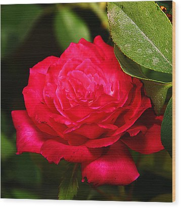 Rose Wood Print by Anthony Jones